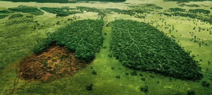 """""""Лісорубам"""" на замітку: За незаконну вирубку лісів будуть позбавляти волі, фото-4"""
