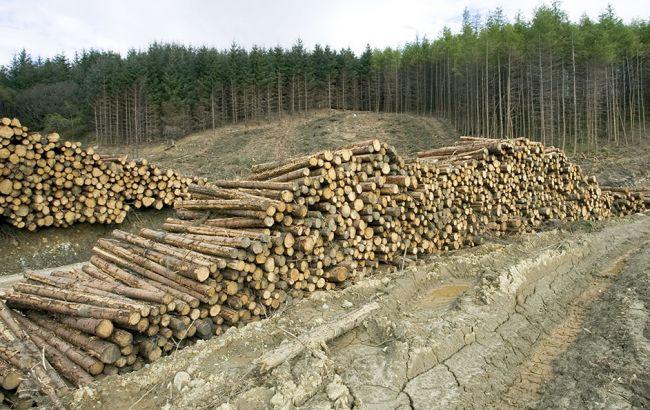 """""""Лісорубам"""" на замітку: За незаконну вирубку лісів будуть позбавляти волі, фото-2"""