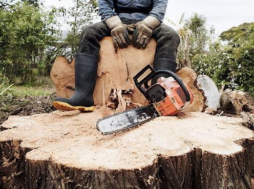 На Днепропетровщине продолжают незаконно вырубать деревья