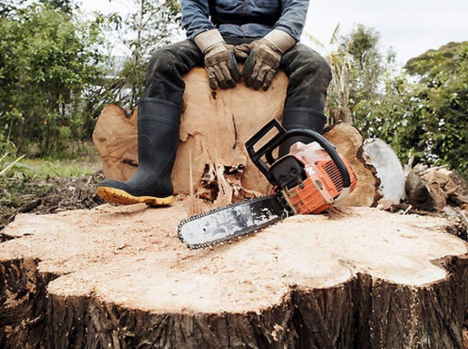 Порошенко ужесточил наказание занелегальную вырубку леса
