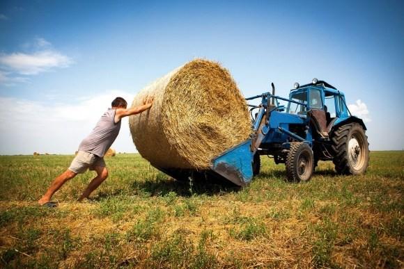 Кабмин создаст областные штабы для недопущения рейдерства урожая уфермеров