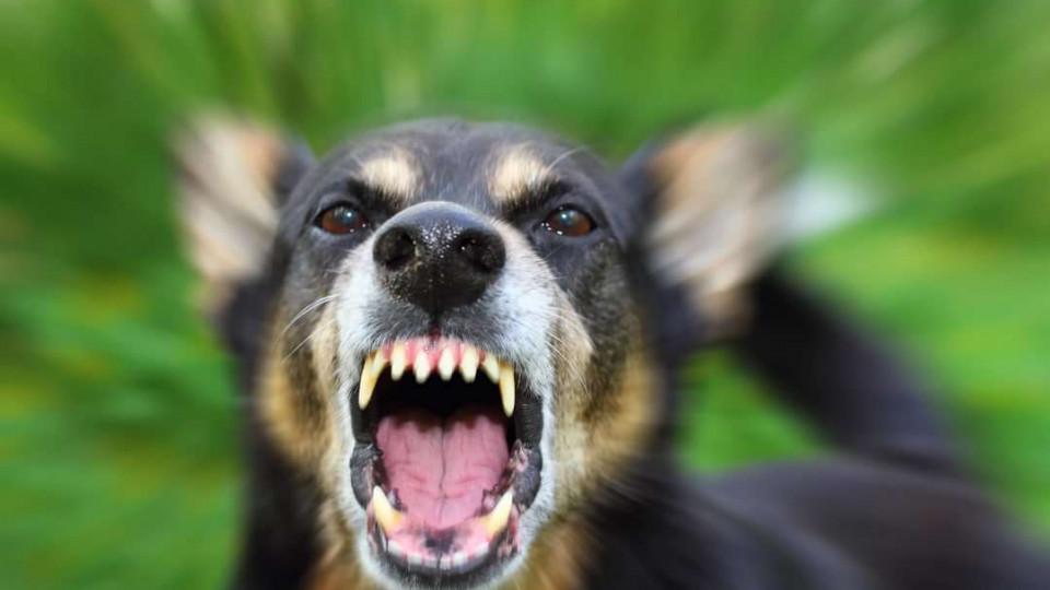 Под Одессой 6-летнюю девочку изувечили уличные собаки