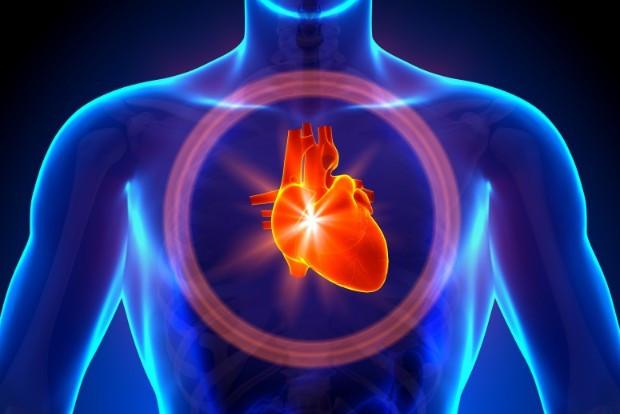 Здоровое сердце надолго: врачи назвали условия сохранения упругости артерий