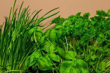 Кому и почему стоит употреблять зелень ежедневно