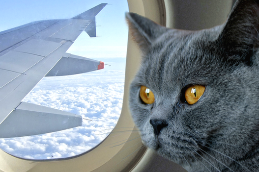 Новые правила перевозки животных за границу: что следует знать