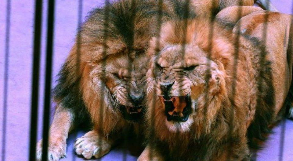 У Києві заборонили діяльність пересувних цирків з тваринами: суд підтвердив законність рішення КМДА