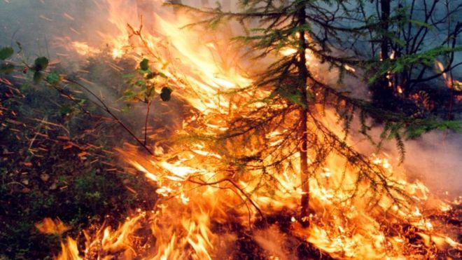 Сибирь в огне: лесные пожары в РФ не тушат из-за экономии средств